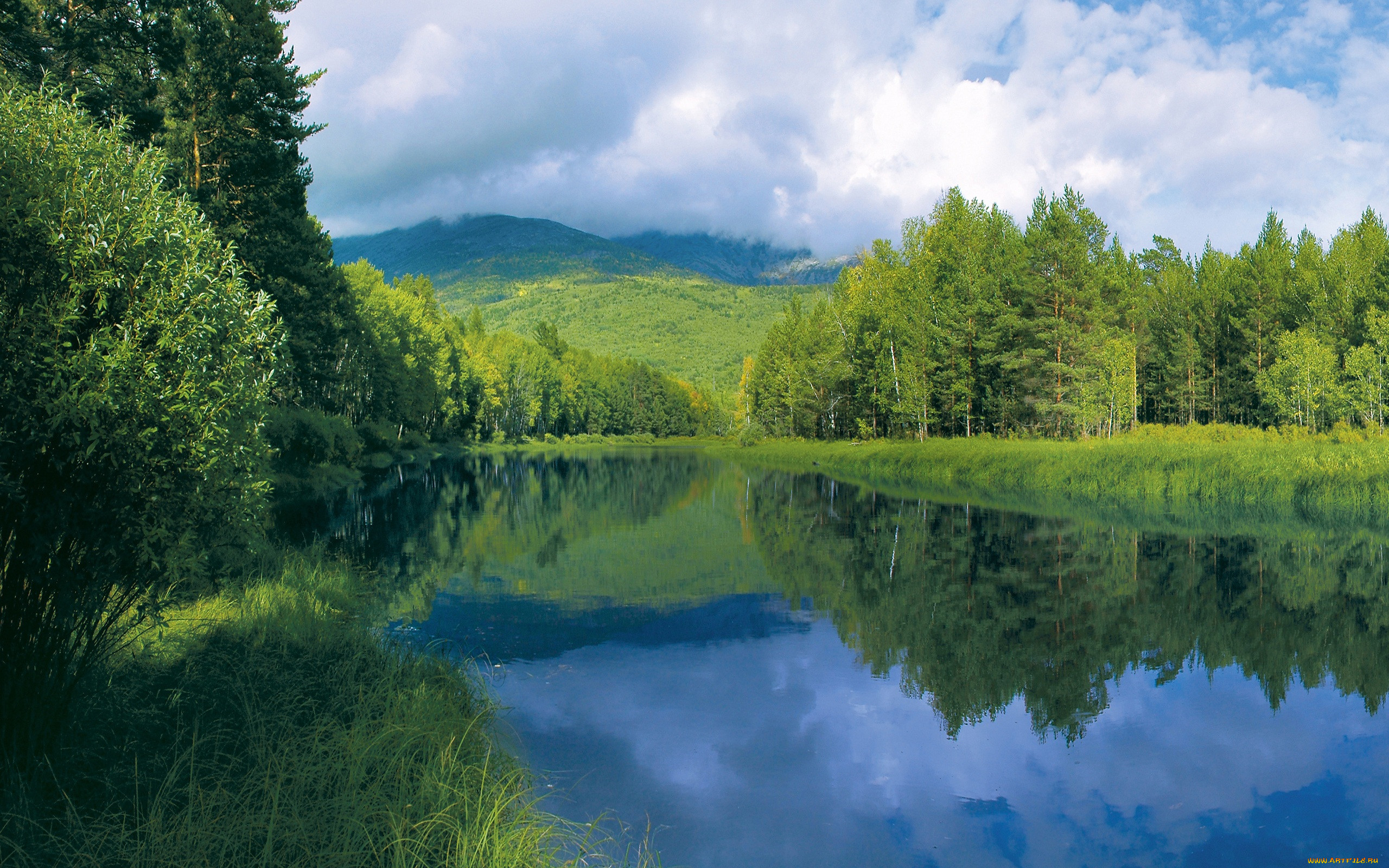 Картинки на рабочий стол природа летом лес
